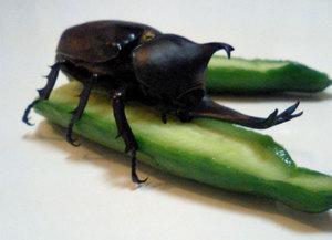 Beetle0978
