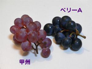 Yukie0388