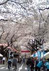 Sakura323
